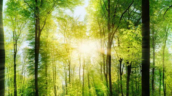 ecologie-foret